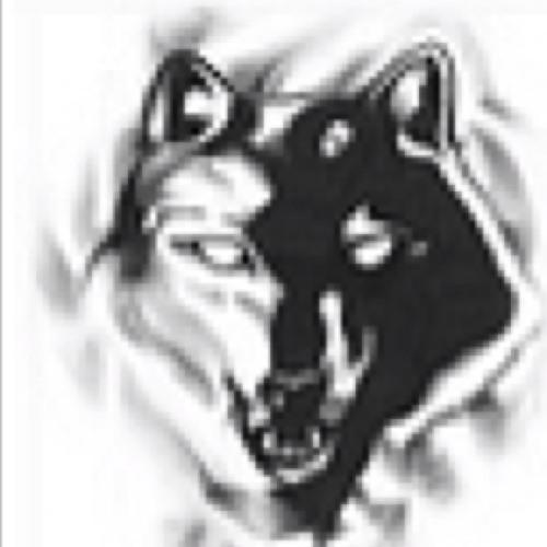 red wolf's avatar