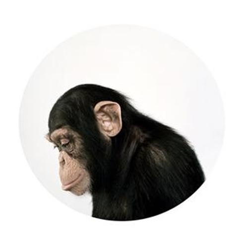 sad_monkey's avatar