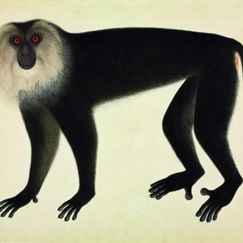 Munki Man's avatar
