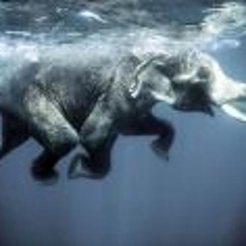 slon's avatar