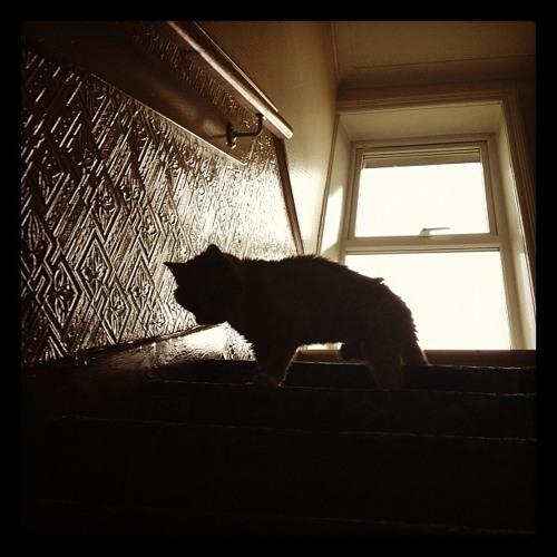 Midnight Kitty's avatar