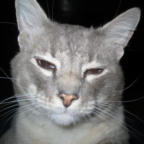 AlfonsoRene's avatar