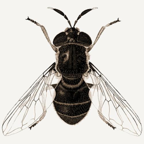 frenchfly's avatar