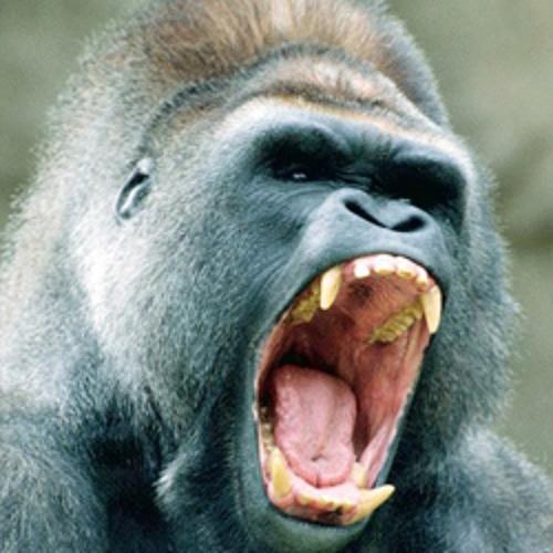 Guerilla Gorilla's avatar