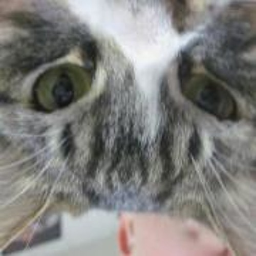 Cherry Sevenfoldism's avatar