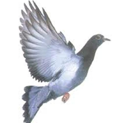 Funkthepigeon's avatar