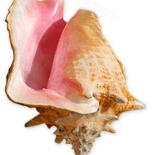 Conch Radio's avatar