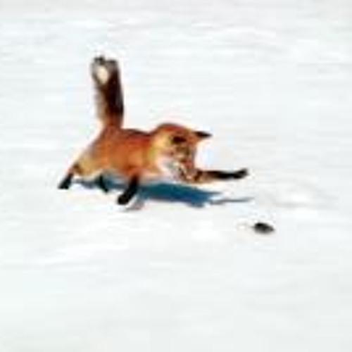 Ann Fox 2's avatar