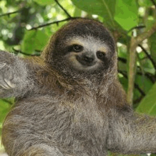 Slothman's avatar