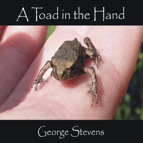 george stevens's avatar