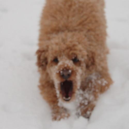 bigdbb's avatar