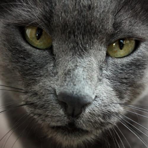 50CaliberCat's avatar