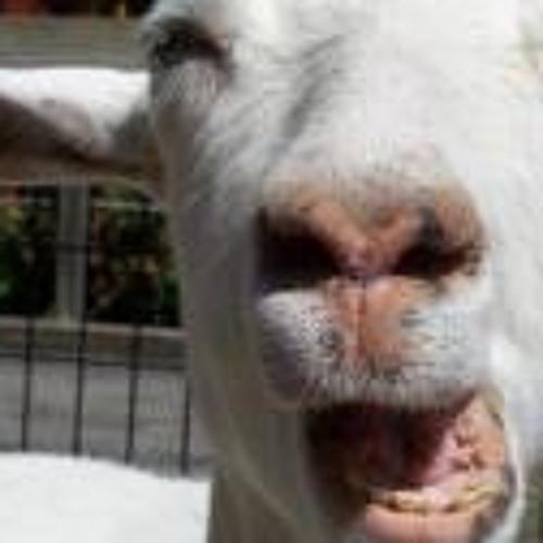 Finduz's avatar