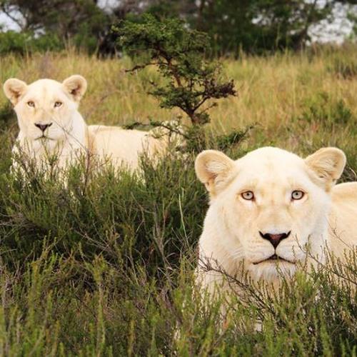 DOUBLE WHITE LION's avatar
