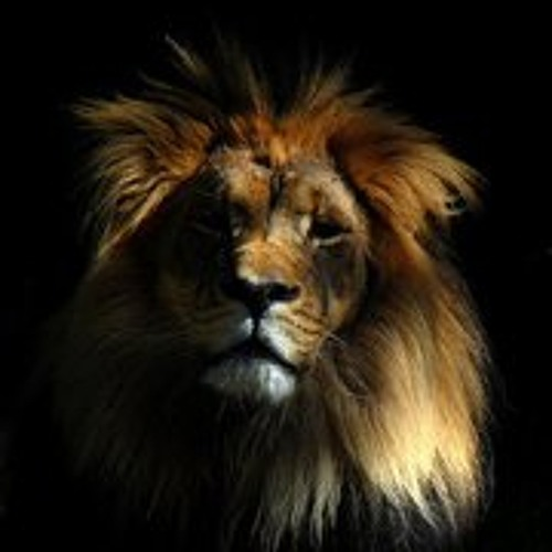 Shady_Lion's avatar