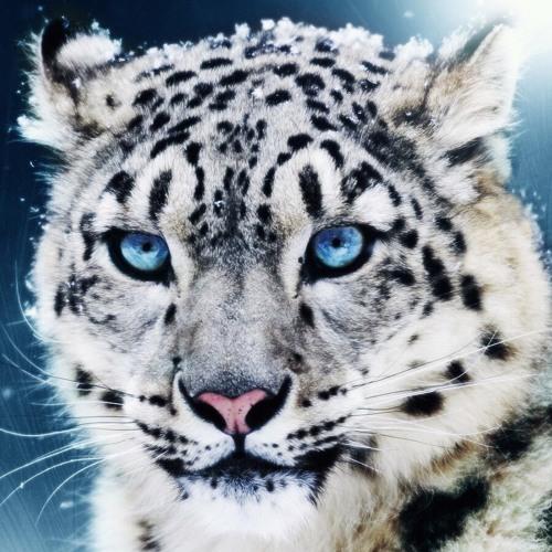 raizinghigh522's avatar