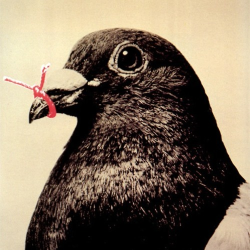 mara hoffman's avatar