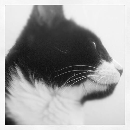jcliosar's avatar