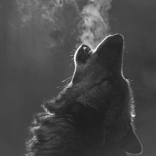 LYCAN[BE]'s avatar