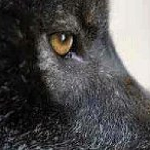 Joseph Blackwolf Walker's avatar
