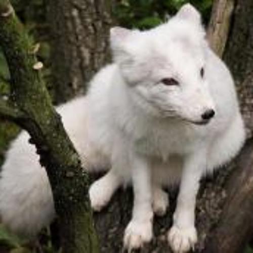 Tundra Fox's avatar