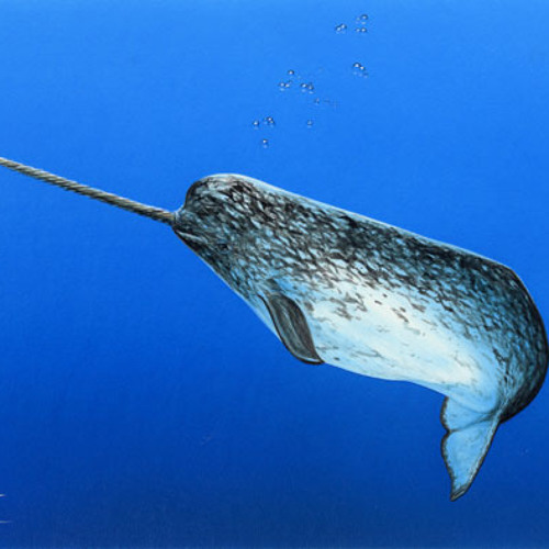 narcolepticnarwhal's avatar