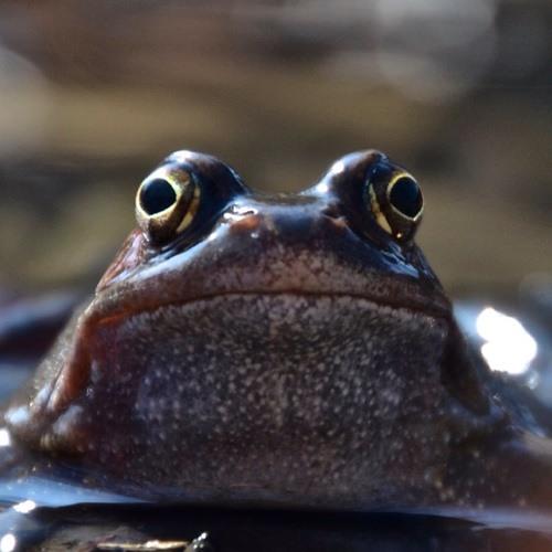 Froschfilmer's avatar