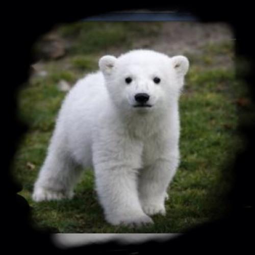 polartt's avatar