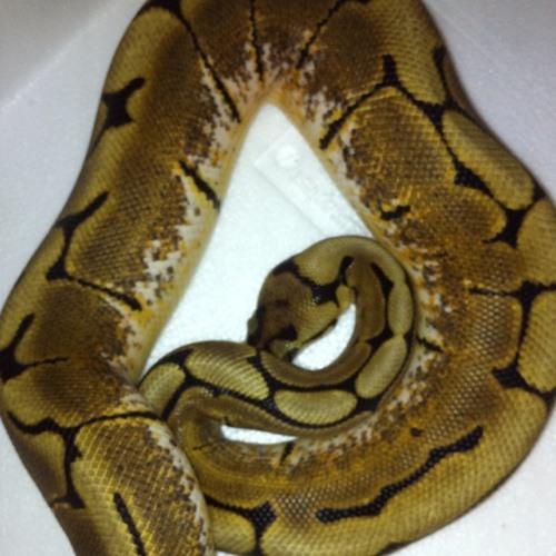 Basti Reptiele's avatar