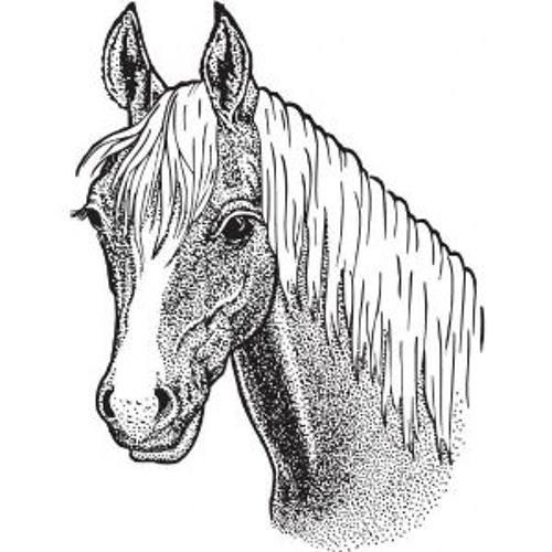 almighty♞'s avatar