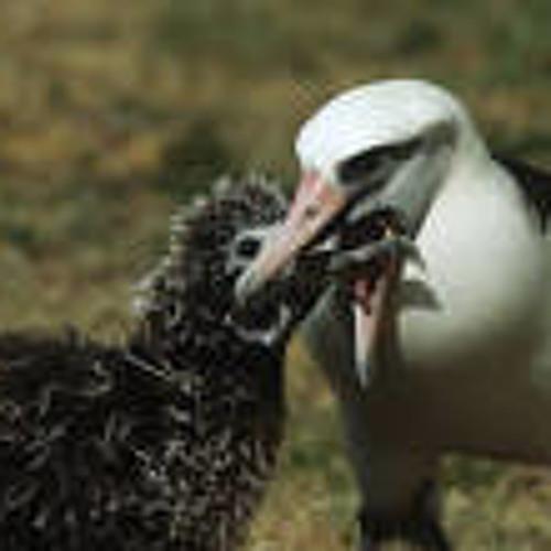 the albatross's avatar