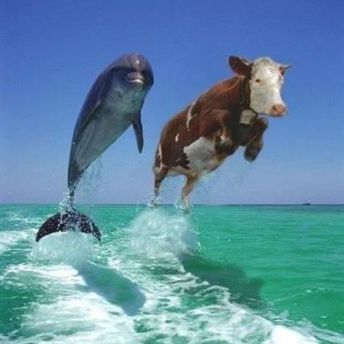 The Sea Cows's avatar