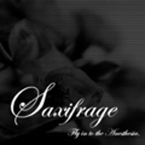 saxifrage's avatar