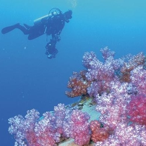 Between The Coral Reefs's avatar