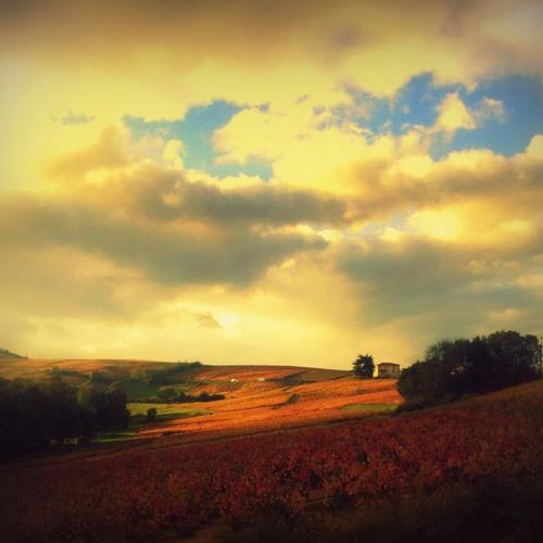 Beaujolais Hills's avatar