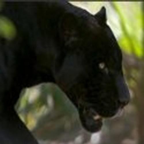 Shadi8's avatar