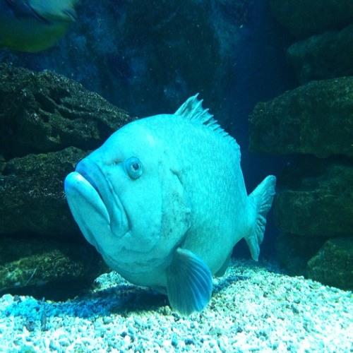High Fish's avatar