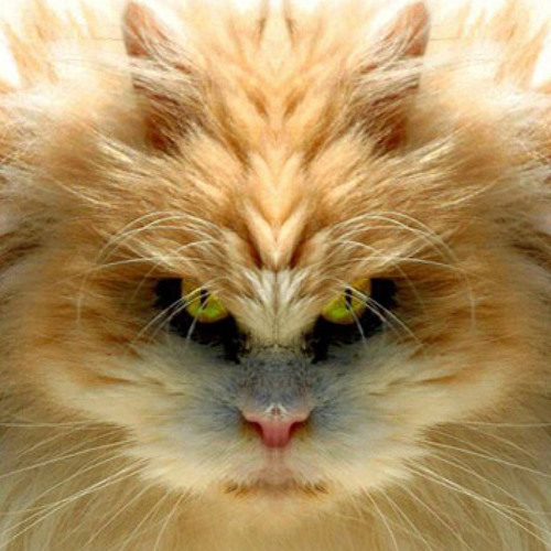 VegassiN's avatar