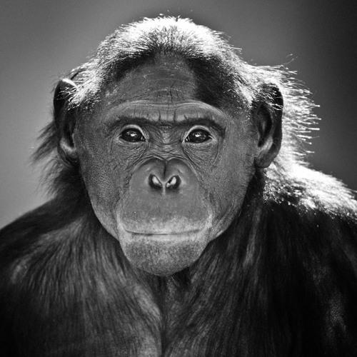 Demian Henkes's avatar