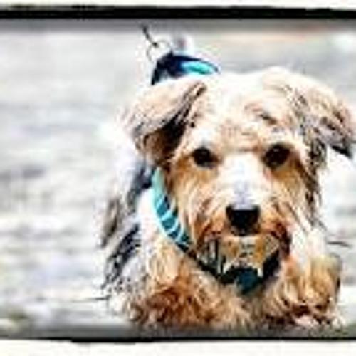 "theunde'r""dogg's's avatar"