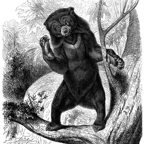 Bearfull records's avatar