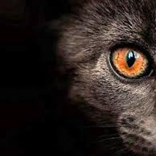 Bad Cats Records's avatar