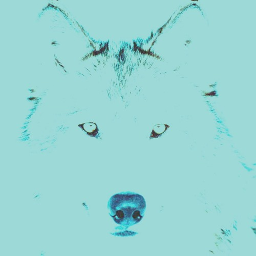 Wolf At Night's avatar