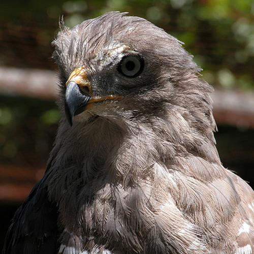 Noidbird's avatar
