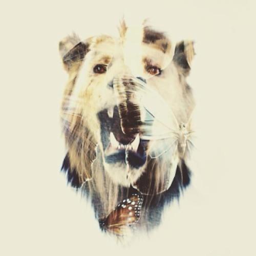 mishkari's avatar