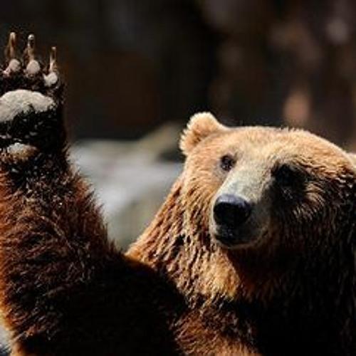 Bonny Bear's avatar
