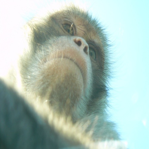 Little Frets's avatar