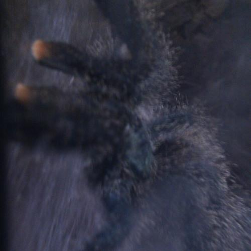 atonalex's avatar