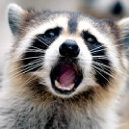 im a raccoon's avatar