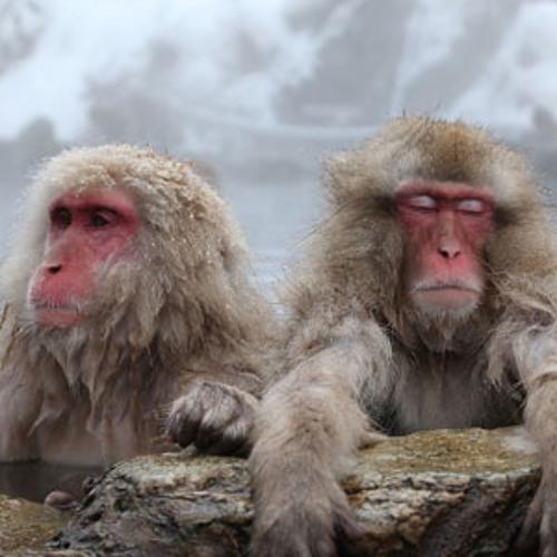 Major Monkeys's avatar